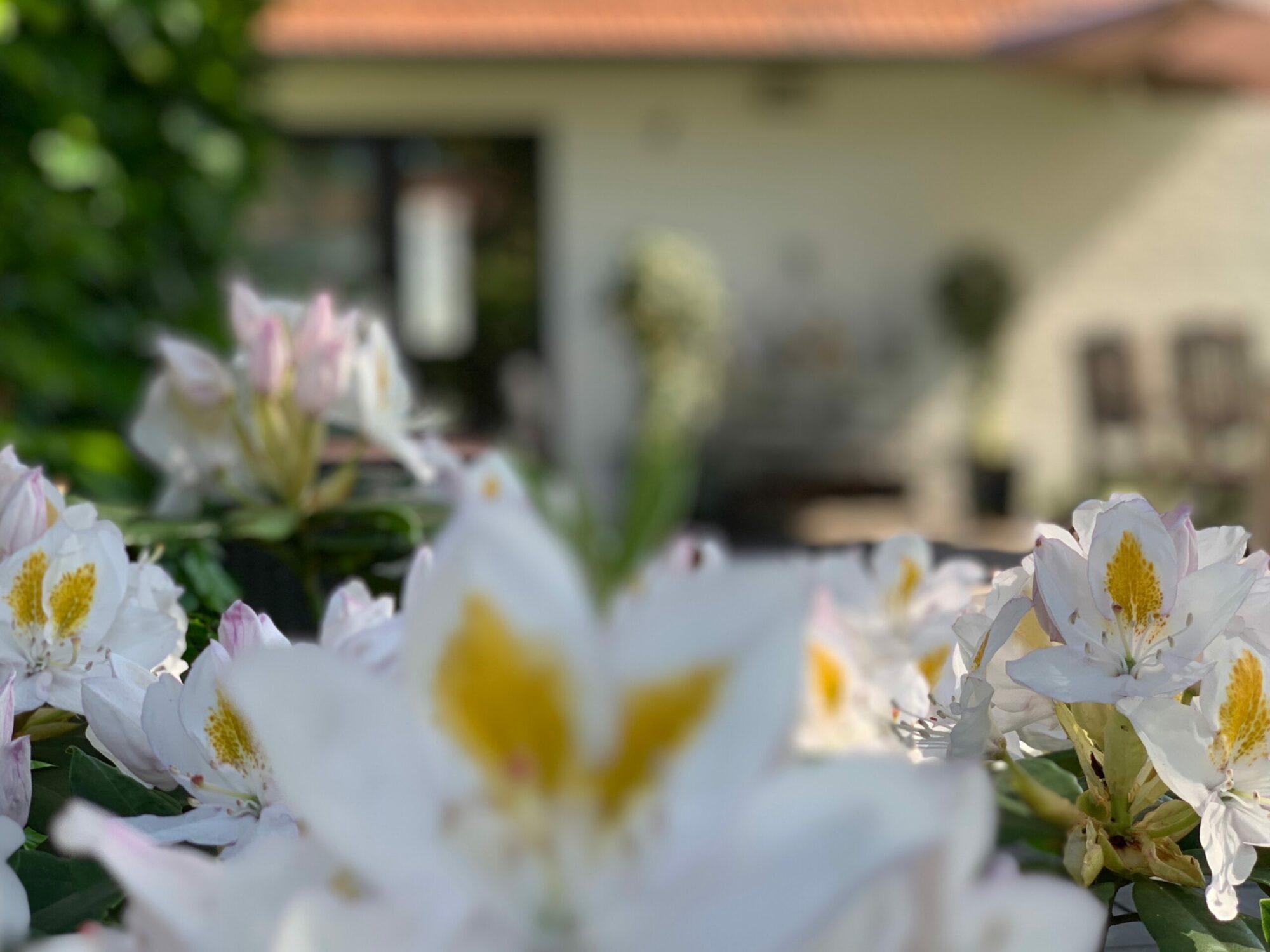 Heitse | B&B en vakantiewoning Sfeervol en luxueus overnachten in het Limburgse Heythuysen